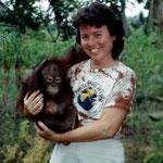 Das Borneo Orang-Utan Baby (Pongo pygmaeus) war fürchterlich traumatisiert, es zuckte jedes Mal zusammen, wenn sein Besitzer in die Nähe kam.