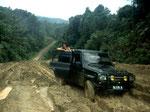 Bei einer sehr anstrengenden mehrtägigen Expedition ins Landesinnere versuchten wir wildlebende Orang-Utans zu finden. Bei diesem Trip wurde uns die Tragweite der Urwaldvernichtung in Kalimantan erst so richtig bewusst.