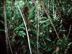 Das Orchideenbiotop ist nur wenige Hektar groß.