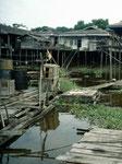 Junge Haiwelse (Pangasius spec.) werden mit Netzen gefangen und anschließend  in den schwimmenden Holzkästen in so genannter Aquakultur mit kleinen Fischchen gemästet.