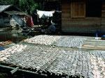 Dieser Trockenfisch wird in den Städten verkauft.