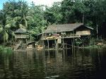 Der Ohong-Fluss ist ein interessantes Gebiet für Schlangenfreunde wie mich. Bei Hochwasser liegen Schlangen auf den Ästen der Bäume entlang des Flusses.