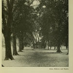 images of campus - trees