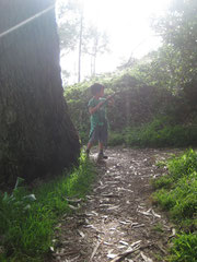 taking a walk in the woods...