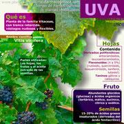 Propiedades de la Uva. Infografía