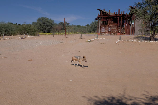 Picnic Site Kgalagadi Transfrontier Park