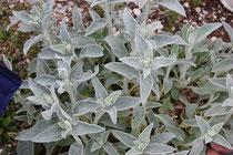 Altre piante particolari