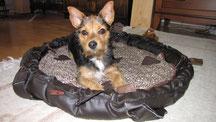 Laika auf ihrem Hundekissen