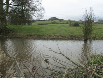 The remains of Frankley Hall moat; Frankley Beeches in the distance