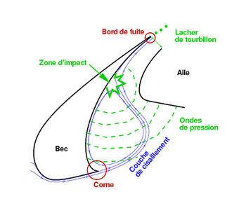 Schéma du fonctionnement du bec de bord d'attaque