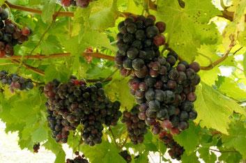Bolzano top things to do - Bolzano wine - Copyright Allie_Caulfield