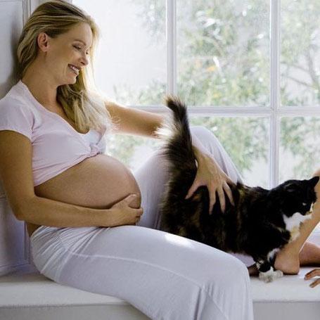 Почему беременным нельзя заводить котят