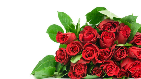 Фото цветов розы на открытку 238