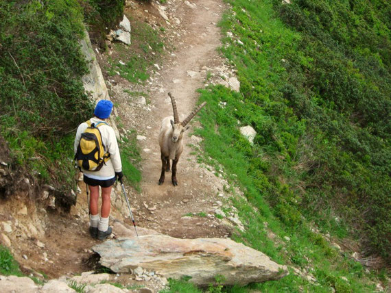 Site de rencontre pyrenees orientales