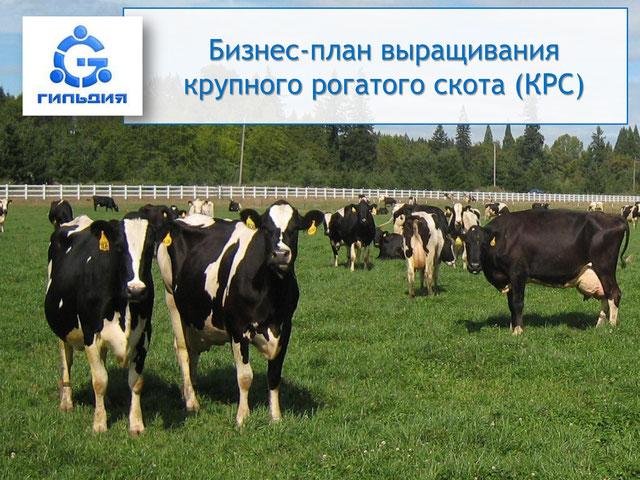 Бизнес план выращивание крупнорогатого скота 1
