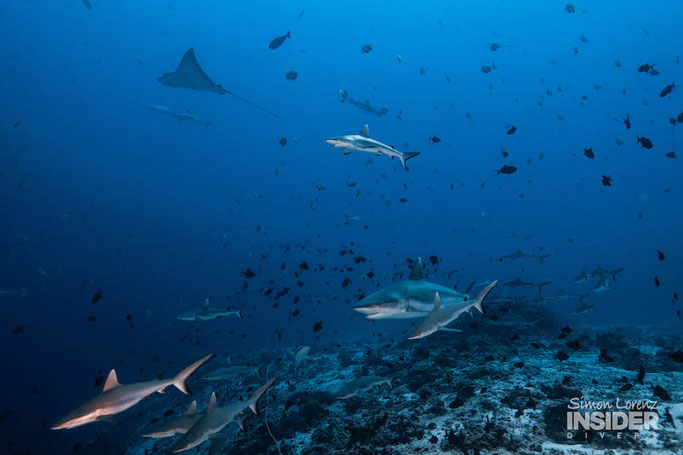 Photo from last years trip by Insider Divers who will be joining us on this trip