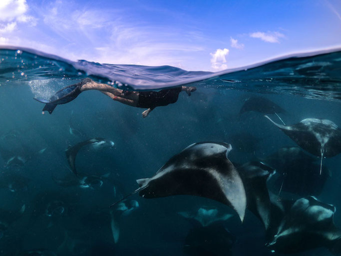 Flossy Barraud, Education and Outreach Officer, Maldivian Manta Ray Project, The Manta Trust