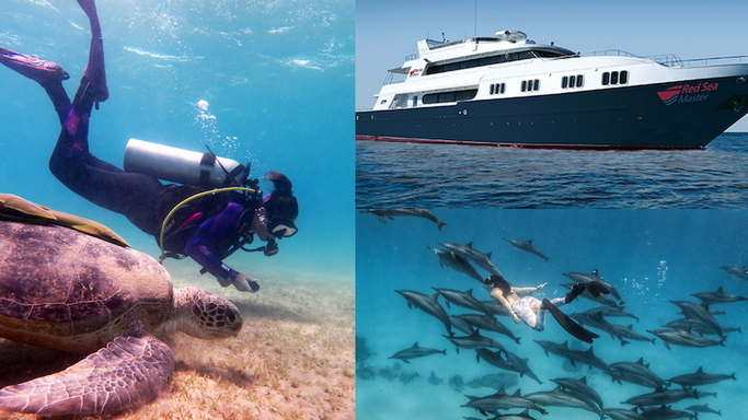 best liveaboard scuba diving trips and holidays to Egypt and Red Sea