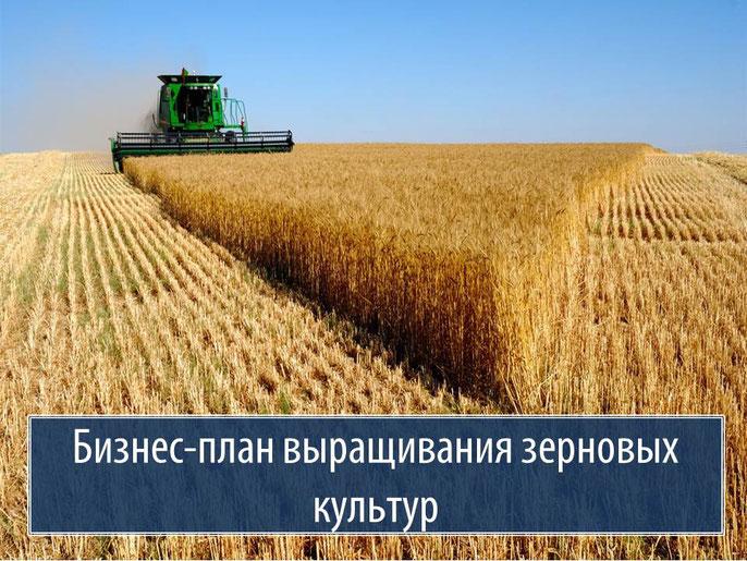 Пример бизнес плана выращивание зерновых культур 54