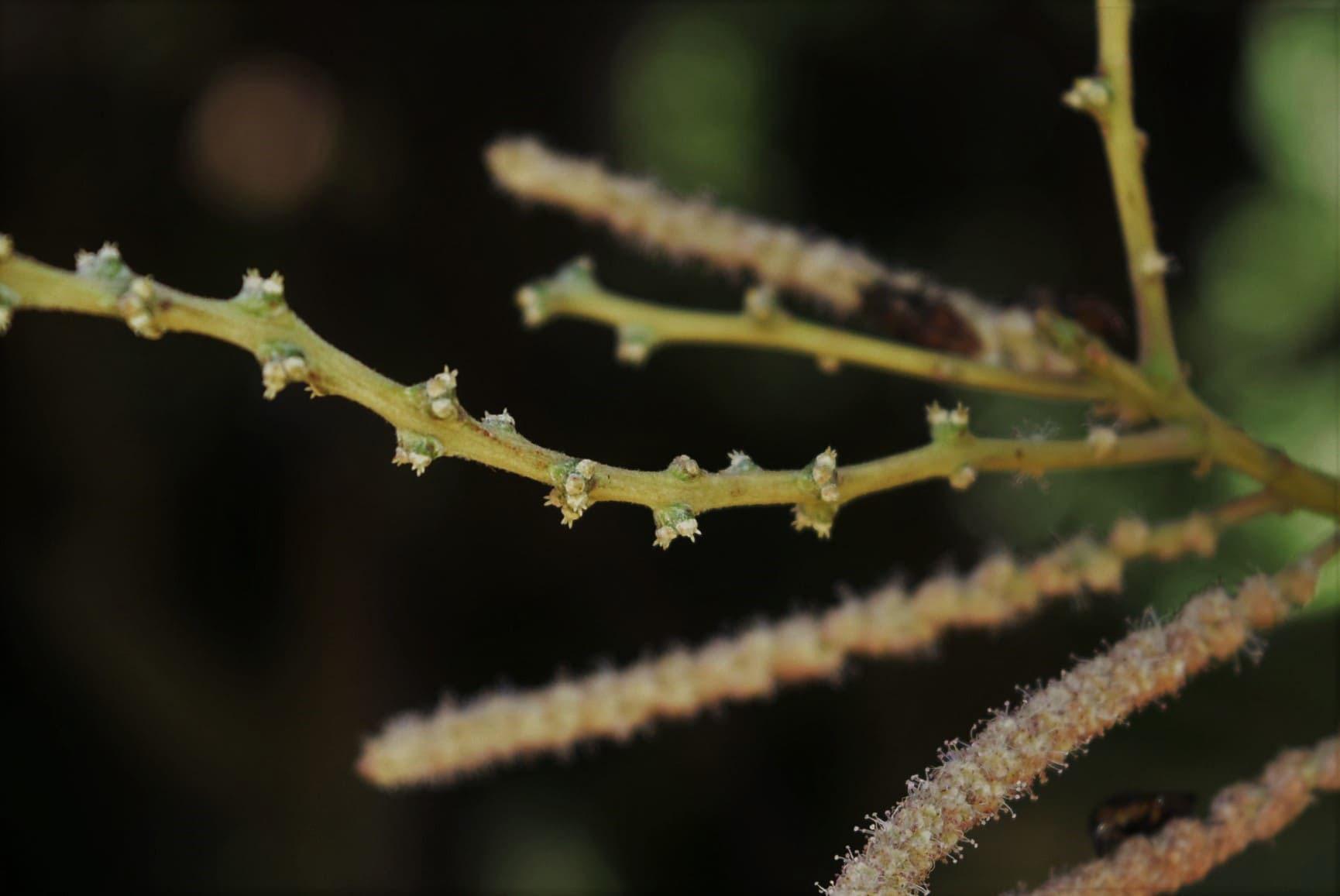 シリブカガシの画像 p1_21