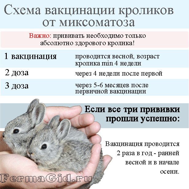 Вакцинировать беременную крольчиху