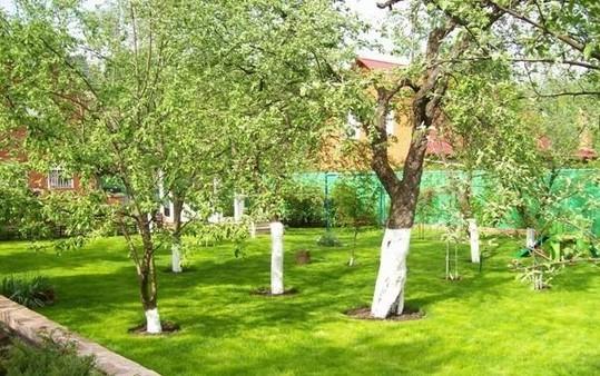 Посадим сад фруктовый своими руками - Планировка дачного участка: оформление и дизайн садового