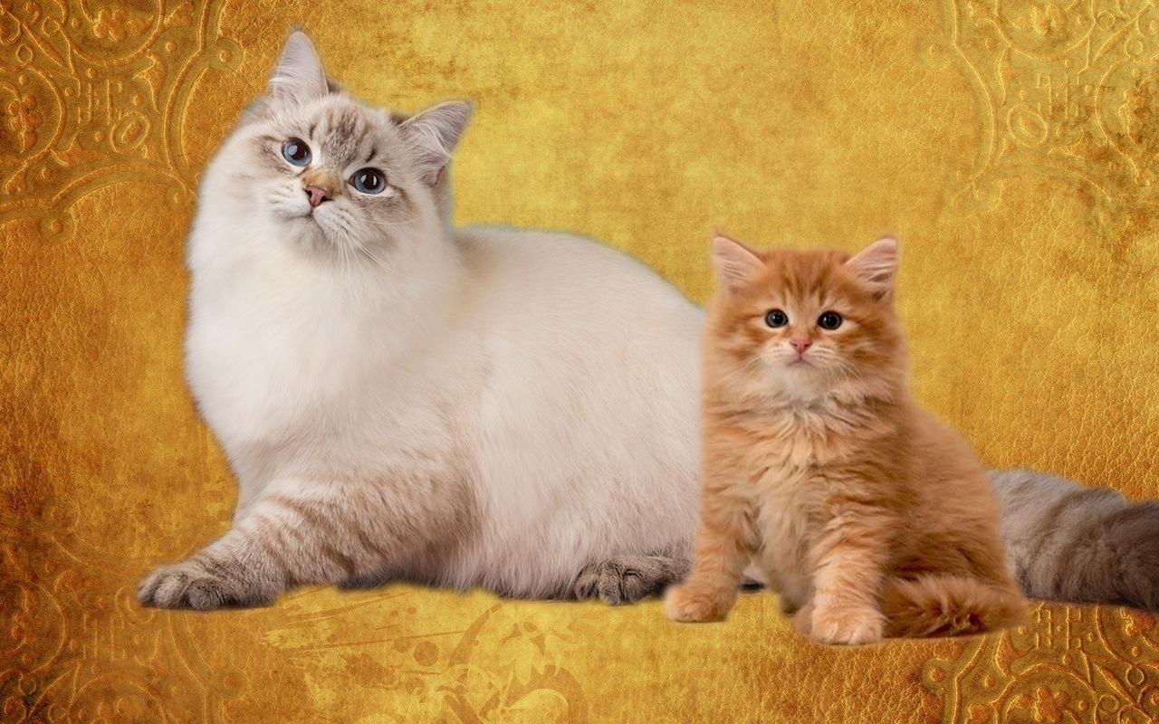 Наши кошки византийские подарки