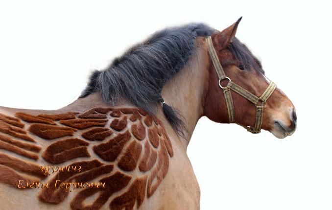 Стрижки для лошадей