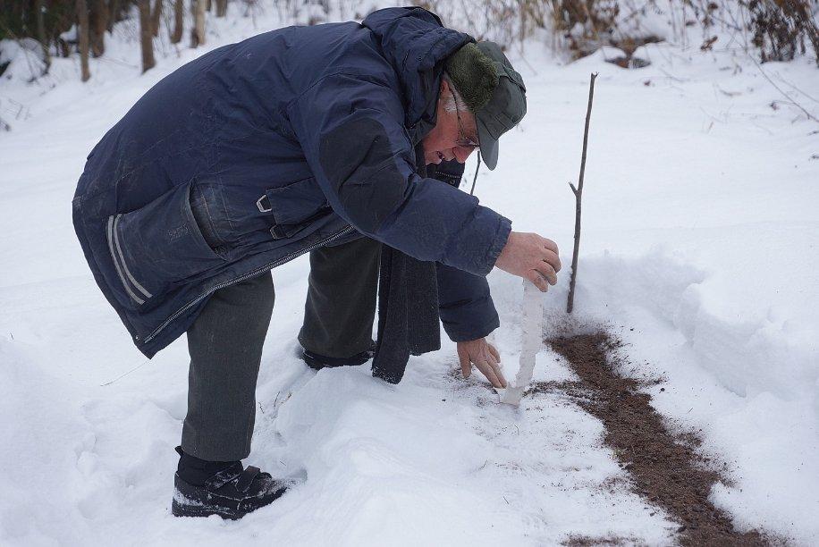 Что сажать до снега