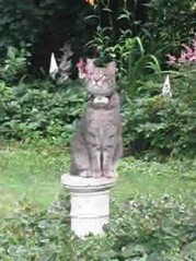 Unique Pet Stop Cat fences