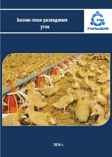Бизнес план по выращиванию уток 8