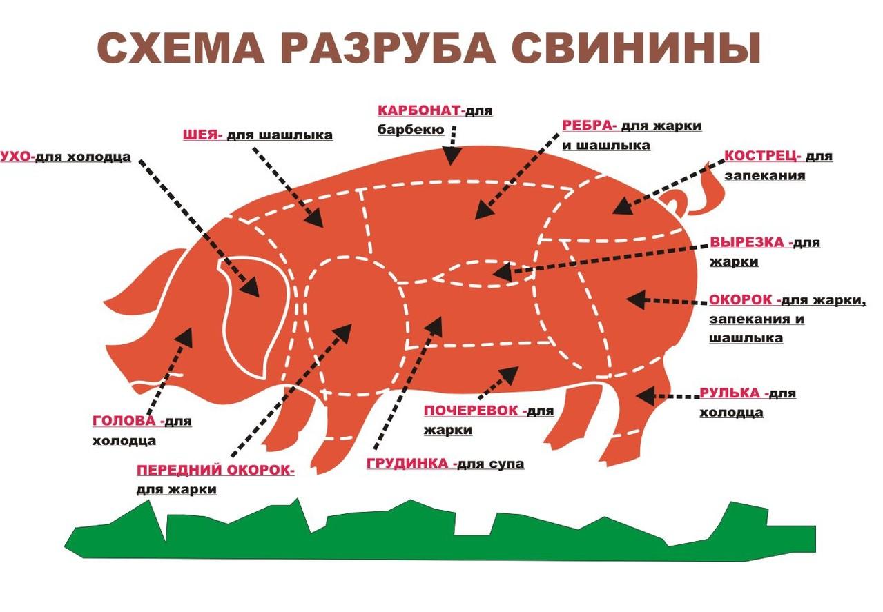 Схема разделки туши говядины и свинины