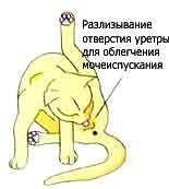 Почки у кошки как лечить в домашних условиях