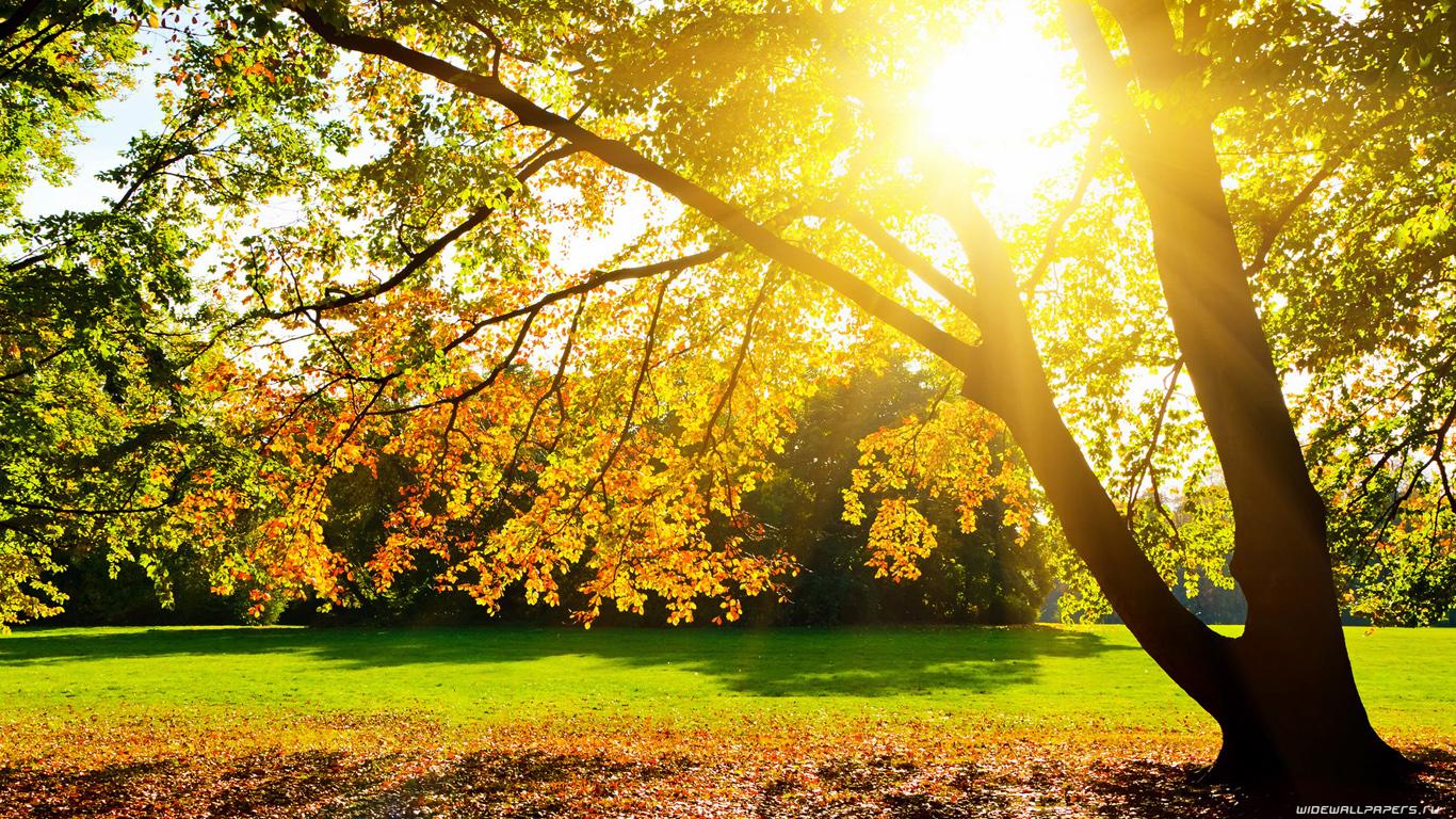 солнечная осень  № 44226 без смс