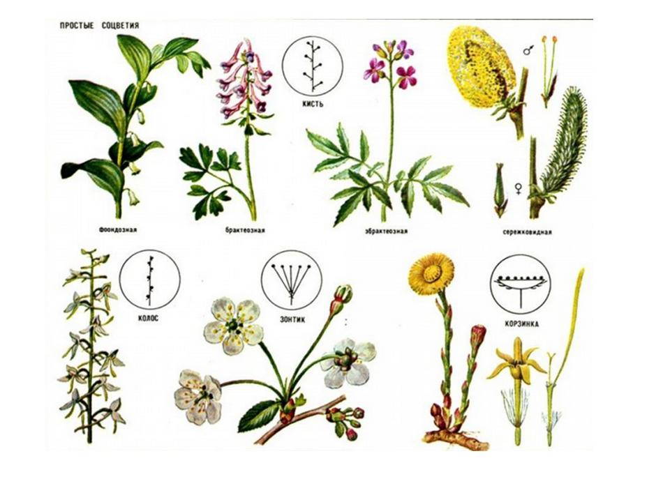 Зачем растению опыление?