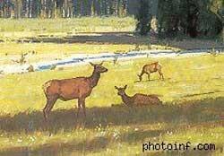 Bức tranh này bố cục tốt hơn nữa khi có thêm 1 con hươu nữa ở hậu cảnh.