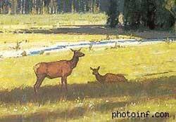 Bố cục này tốt hơn. Con hươu bên tay phải có tư thế và kích thước khác.