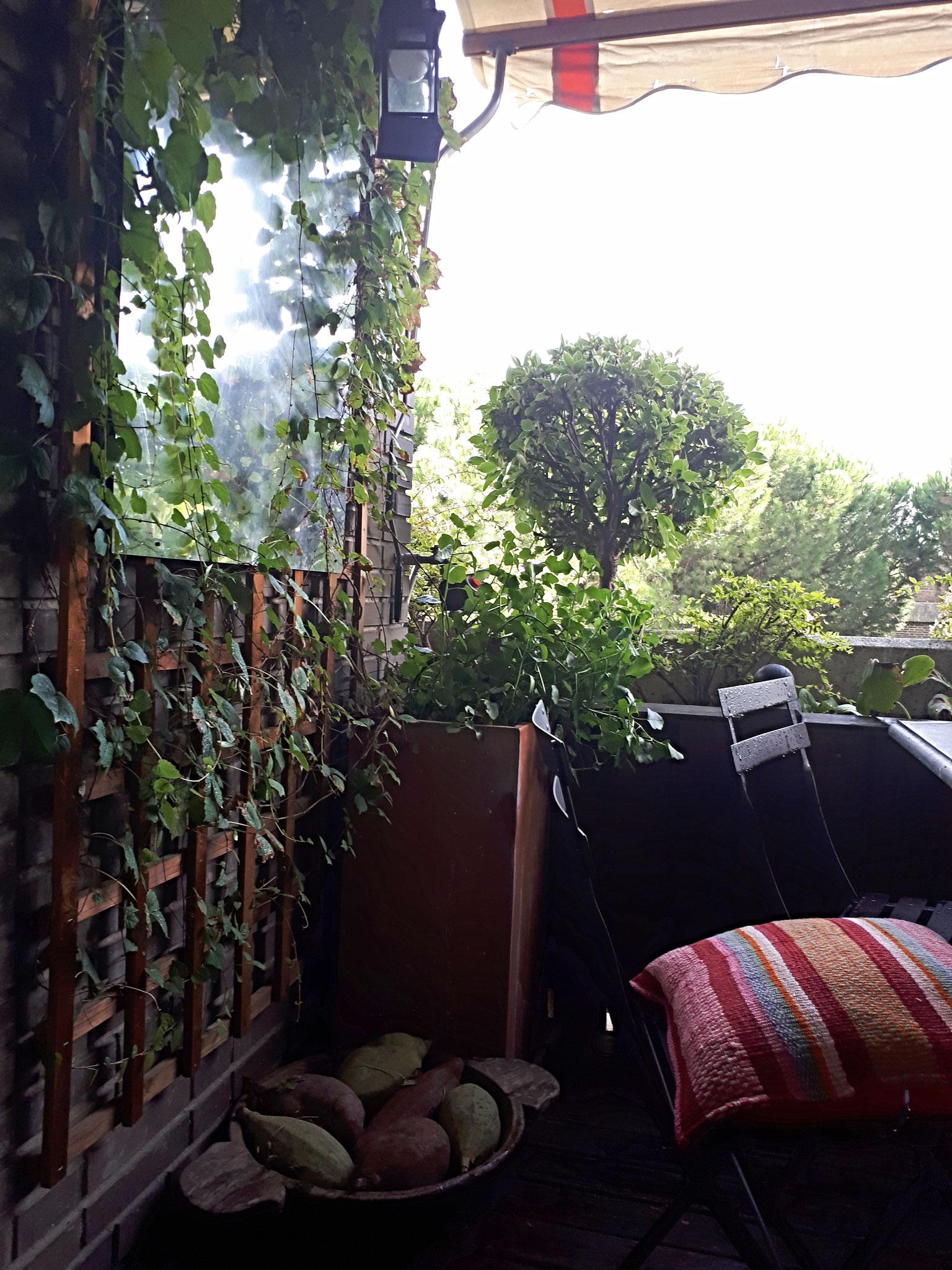 CAROLA VIVES paisaje y decoracin Diseo de jardines diseo de