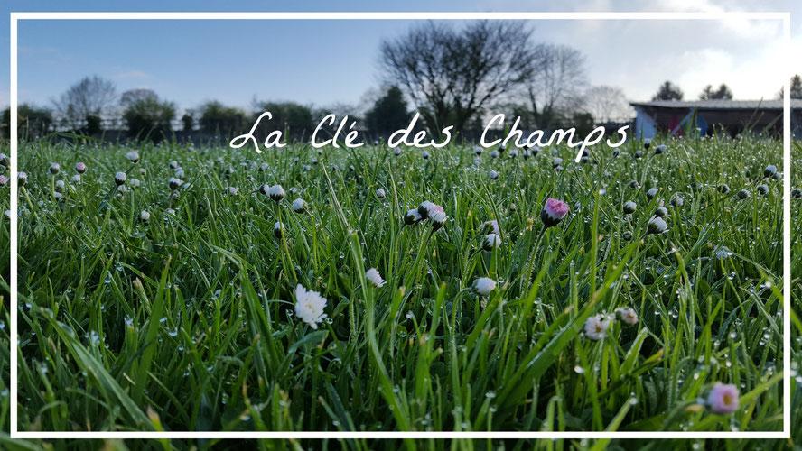 Célèbre Fleur de Coton - la cle des champs normandie WA92
