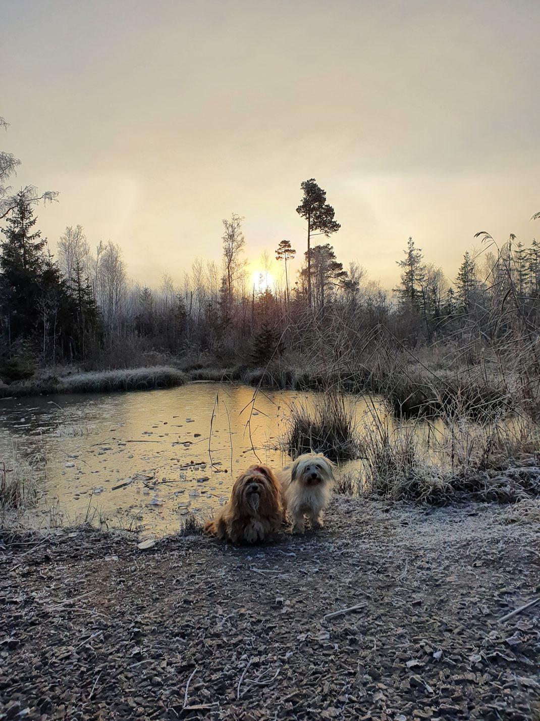 zwei Hunde vor einem gefrorenen Teich