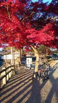 千姫の小道