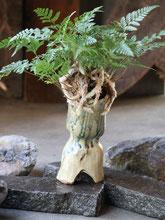 トキワシノブ盆栽 6500円