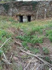 environnement sécheresse ferme coutant and cow Mauléon 79
