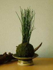 姫とくさ         ¥1,100(税込)受皿別     径約7cm×高さ約21cm