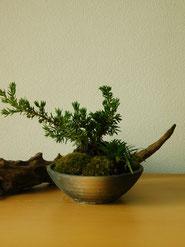 紫杜松・玉竜       ¥2,750(税込)        鉢径約11cm×高さ約15cm