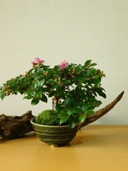 姫百日紅         ¥2,200(税込)        鉢径約8cm×高さ約15cm