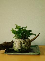 石化しのぶ        ¥2,200(税込)        径約10cm×高さ約13cm