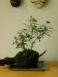 姫ばら          ¥1,540(税込)        径約12cm×高さ約24cm