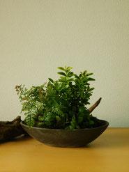 寄せ植え         ¥2,750(税込)        鉢約11×18cm×高さ約15cm