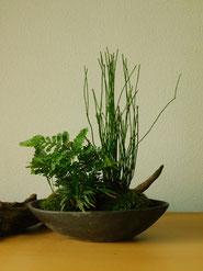寄せ植え         ¥3,300(税込)        鉢約11×18cm×高さ約22cm